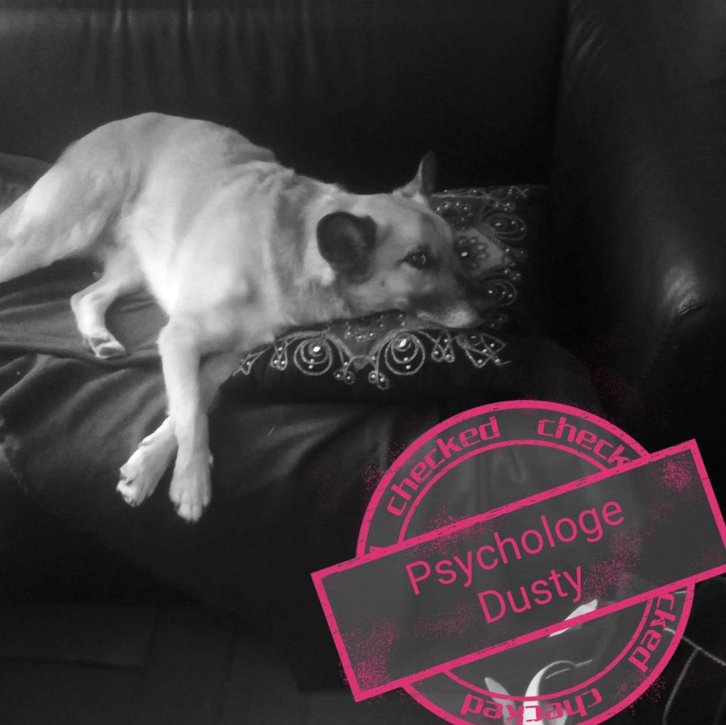 Dusty der Bandhund und Psychologe liegt mit fragendem Blick am Sofa. Sein Kopf liegt dabei auf einem Kissen